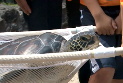 VIDEO: Sea Turtle Independence Day 2012