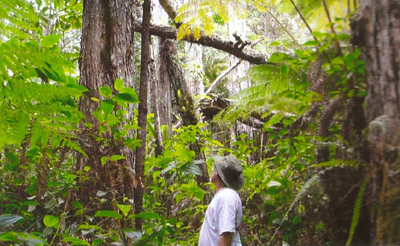 VIDEO: Waikakuu Forest goes before open space commission