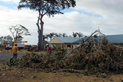 Shade trees at Pahala Park hewn