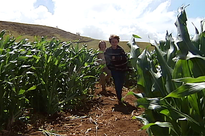 VIDEO: Hawaii Island's first corn maze in Kohala