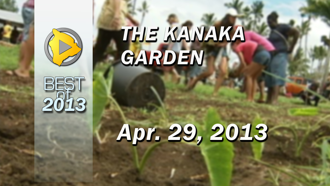 VIDEO: Kanaka Garden replanted in defiance