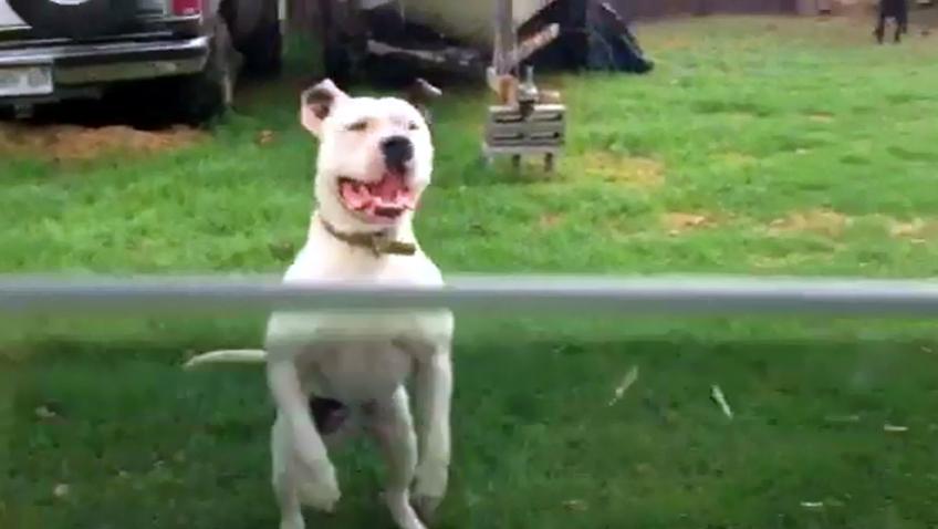 VIDEO: Loose dogs terrorize Waimea