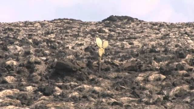 VIDEO: All Puuanahulu brushfires contained, investigation underway