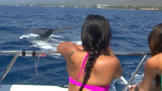 Humpback whale meets students off Kona coast