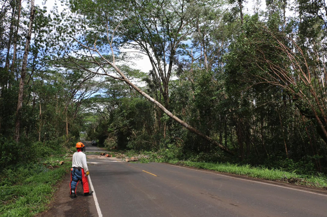 VIDEO: DLNR Forestry Crews Tackle Fallen Trees In Puna