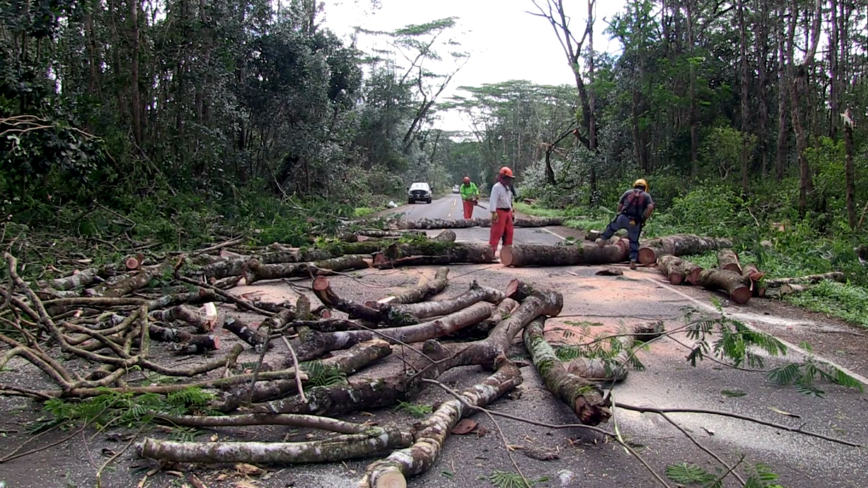 In the wake of Iselle, DLNR DOFAW crews have been hard at work clearing fallen trees in Puna
