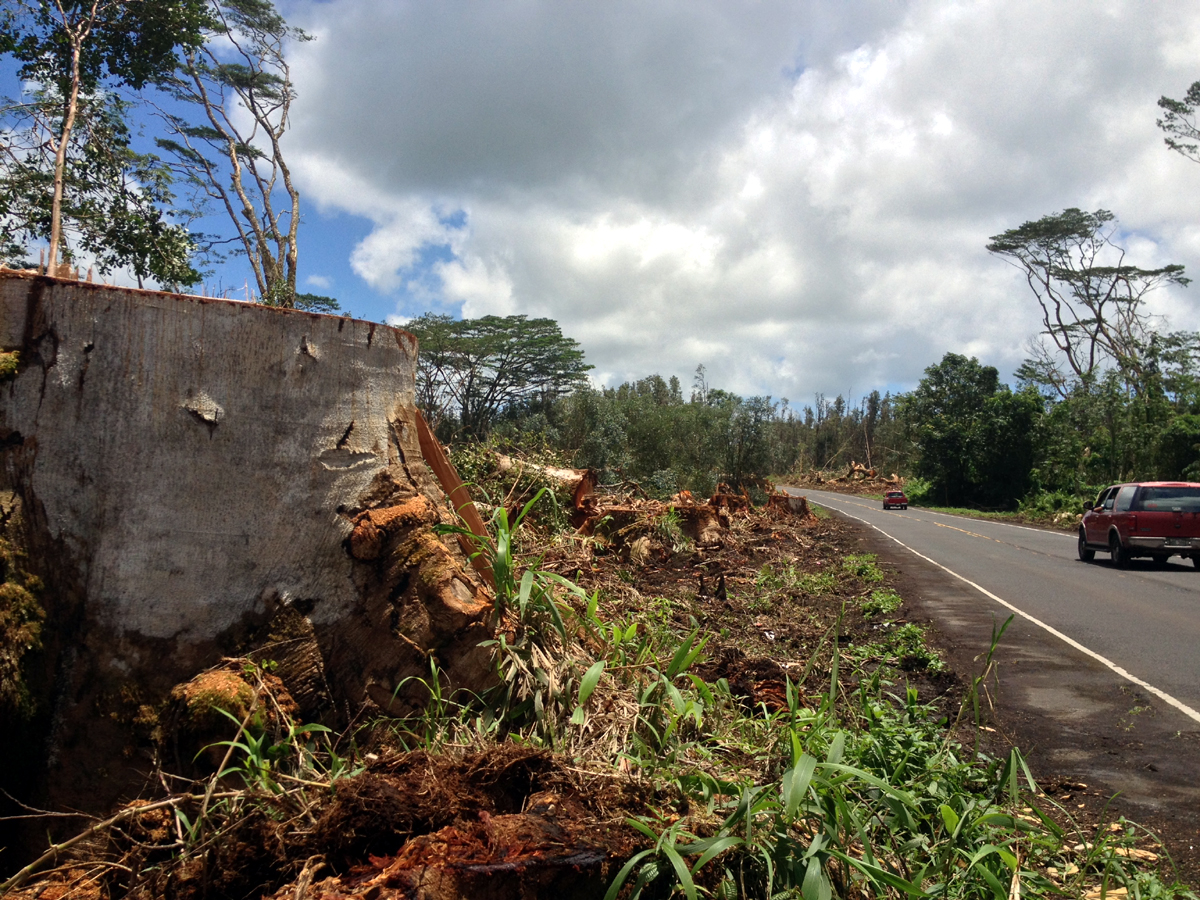 Highway 132 deforested following Iselle, Photo by David Corrigan