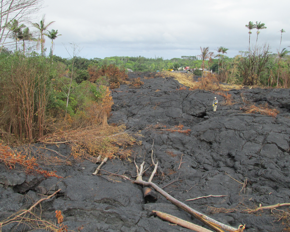USGS HVO photo shows the inflated flow field below the Pāhoa cemetery looking northeast toward the houses on Pāhoa Village Road. Note geologist in the center of the photo for scale.