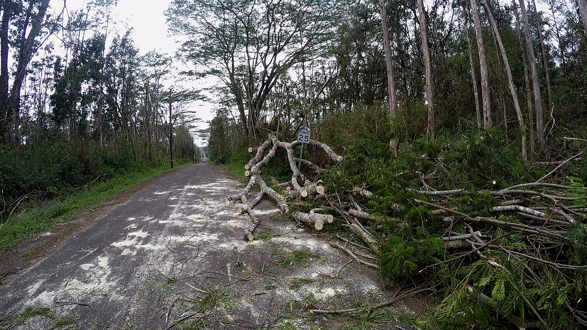 Fallen trees are pushed to the side of the road in Leilani Estates
