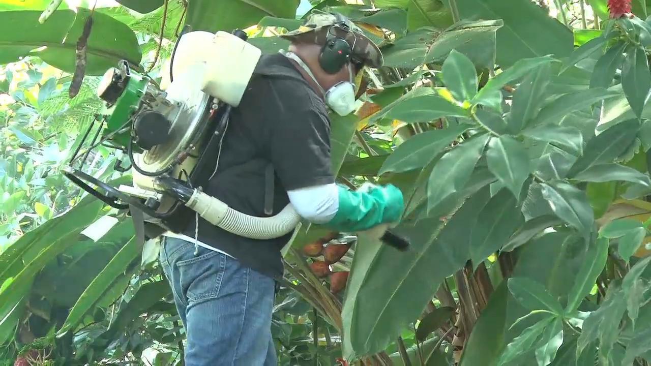 VIDEO: Dengue Fever Update From Hawaii DOH