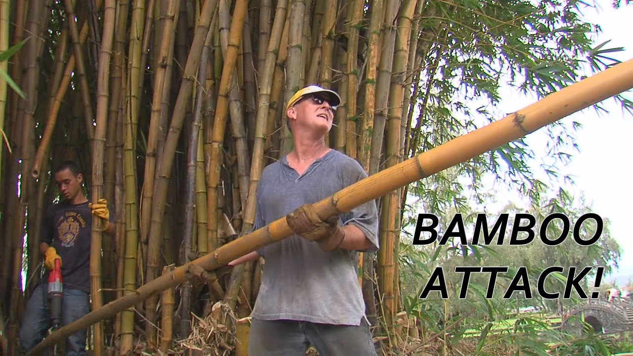 VIDEO: Volunteers Battle Hilo Bamboo Stand