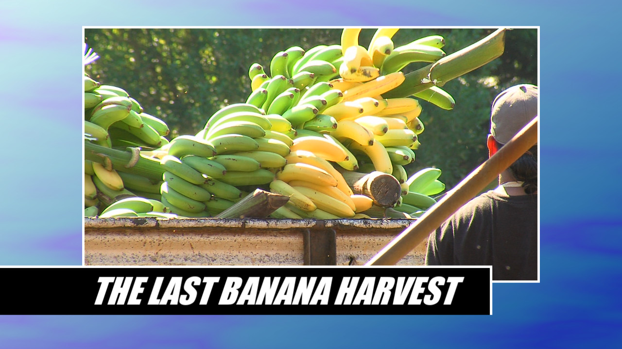 VIDEO: Richard Ha Quits Bananas, Considers Medical Marijuana