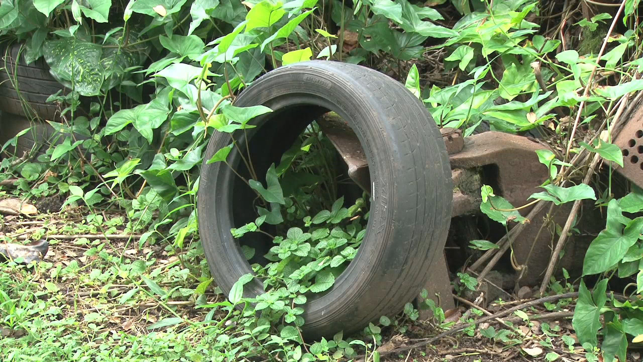 VIDEO: Thousand Tires On Ocean View Property Cause For Concern