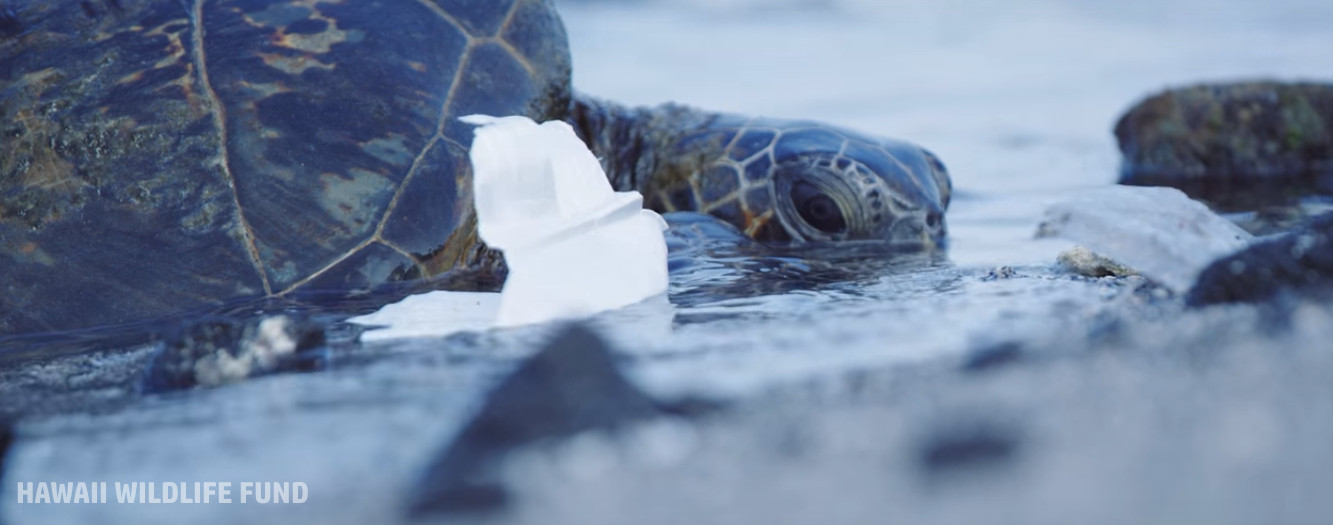Hawaii Wildlife Fund Celebrates 20 Years