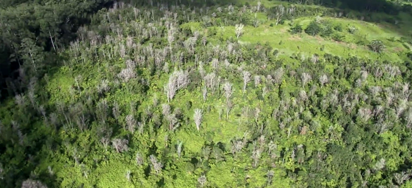 Travel Alert Issued For Hawaii Island Due To Rapid Ohia Death
