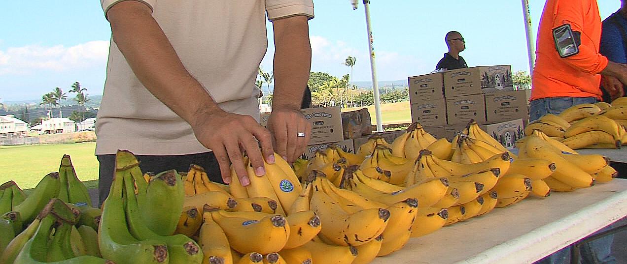 VIDEO: Richard Ha Gives Away Last Banana Harvest