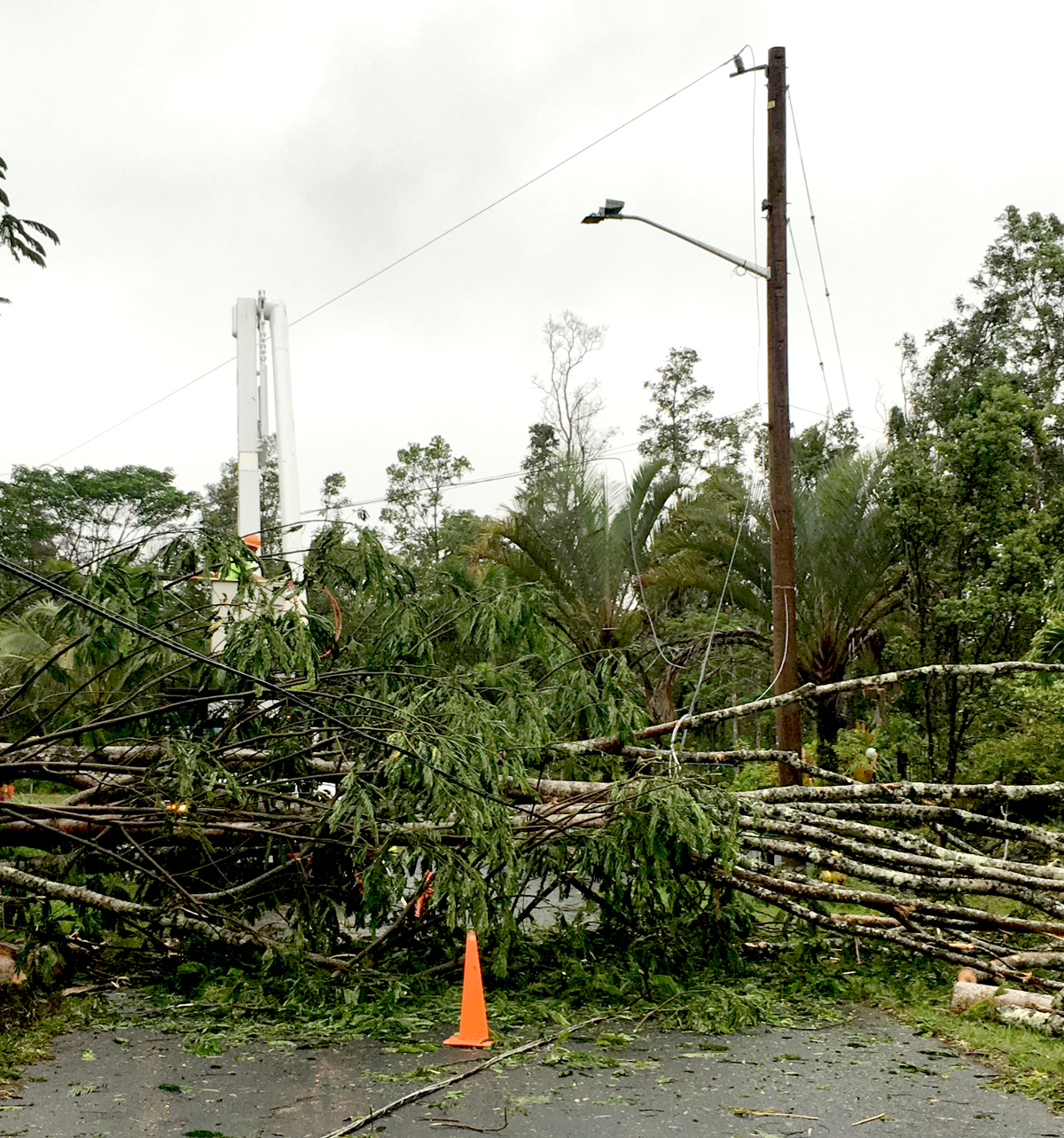 (HELCO photo) A Hawai'i Electric Light crew works to clear a fallen albizia tree from power lines in Pohoiki.