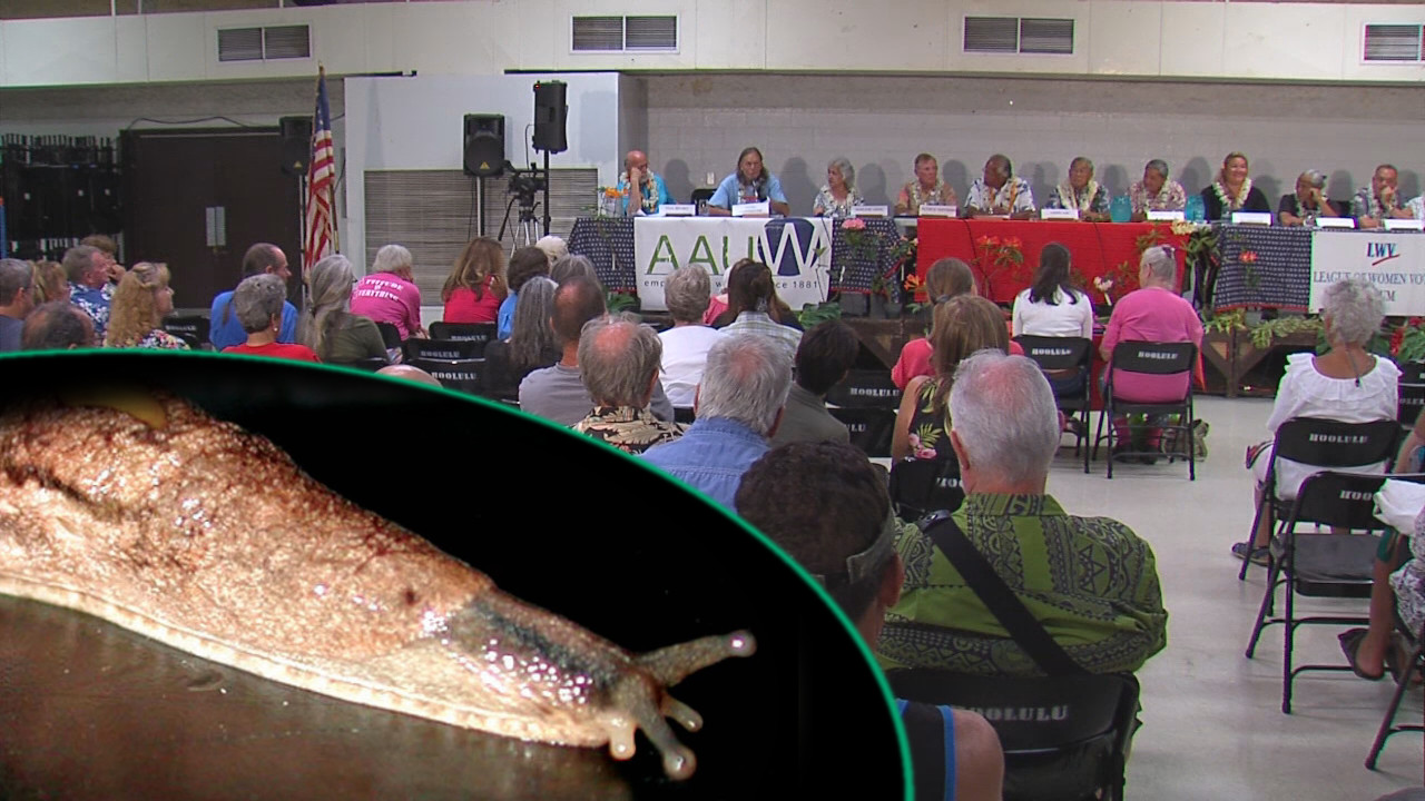 VIDEO: Rat Lungworm Disease – Candidates On The Record