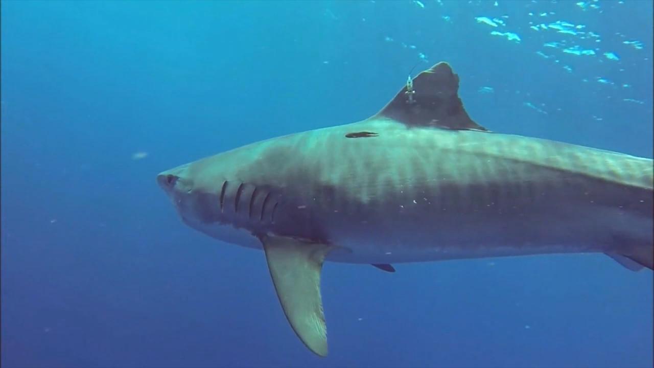 VIDEO: Emerging Mass Extinction In Ocean Studied