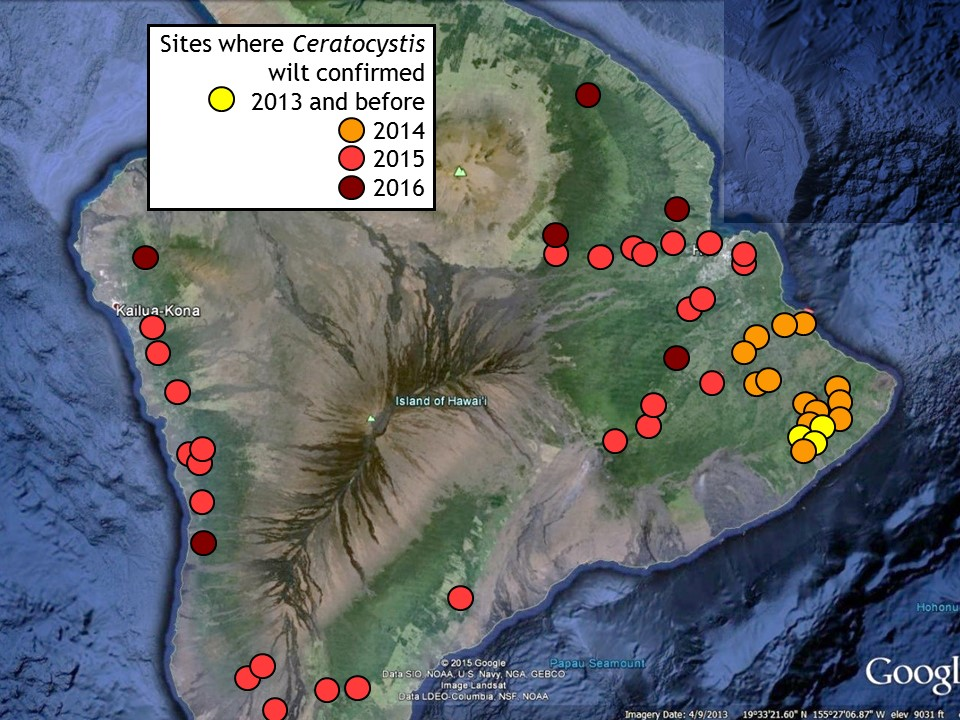 The latest map, published on Nov. 18, courtesy the Rapid Ohia Death page by CTAHR.