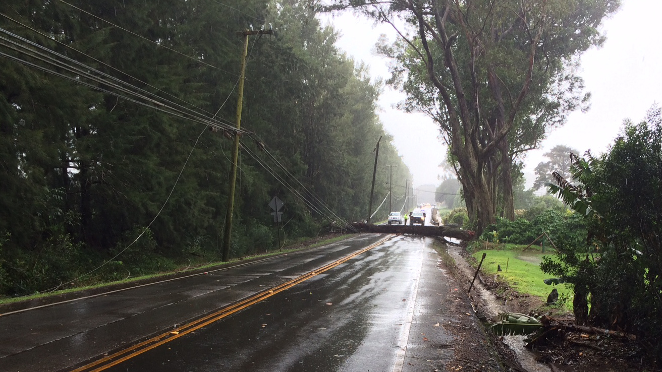 Fallen Tree Closes Highway 19 In Waimea