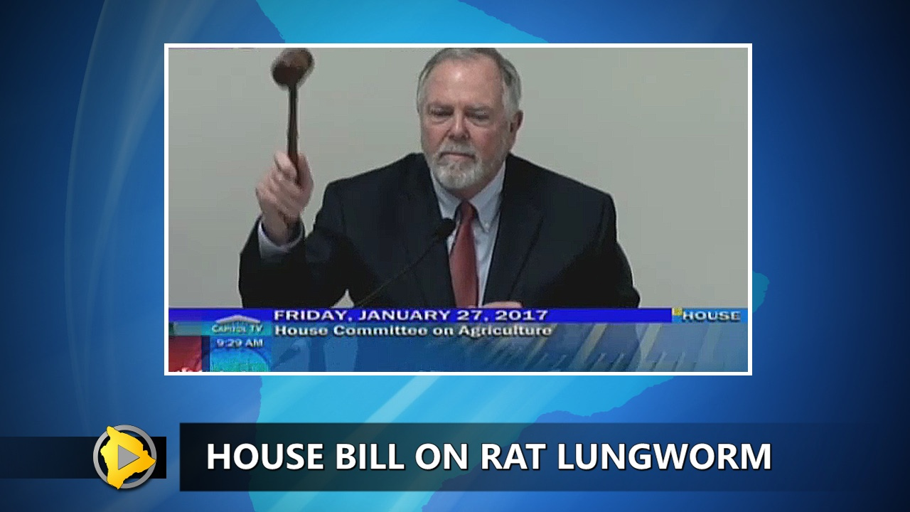 VIDEO: Rat Lungworm Disease Bill Advances