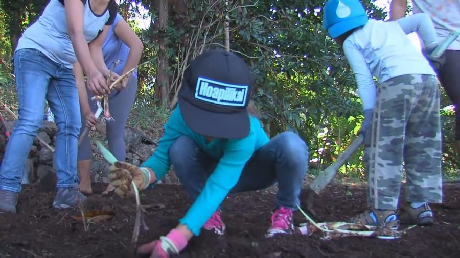 VIDEO: Stewardship Grant For Waipi'o Lookout Continues