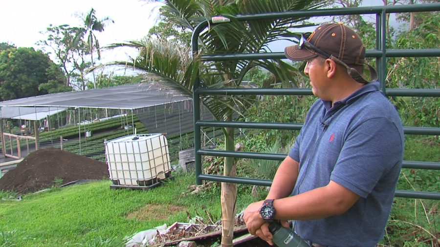 VIDEO: Kona Coffee Farmer Faces Deportation