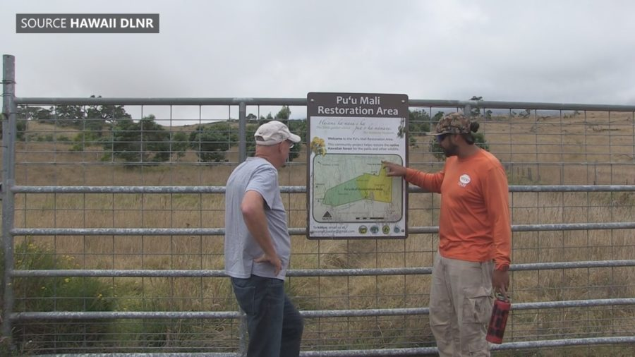 VIDEO: Carbon Project Underway At Puu Mali On Mauna Kea