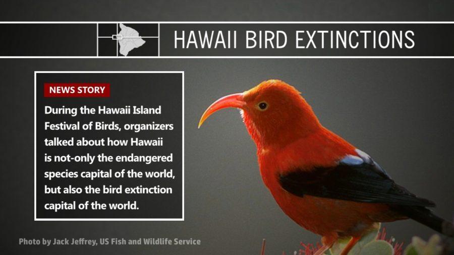 VIDEO: Hawaii, Bird Extinction Capital Of The World