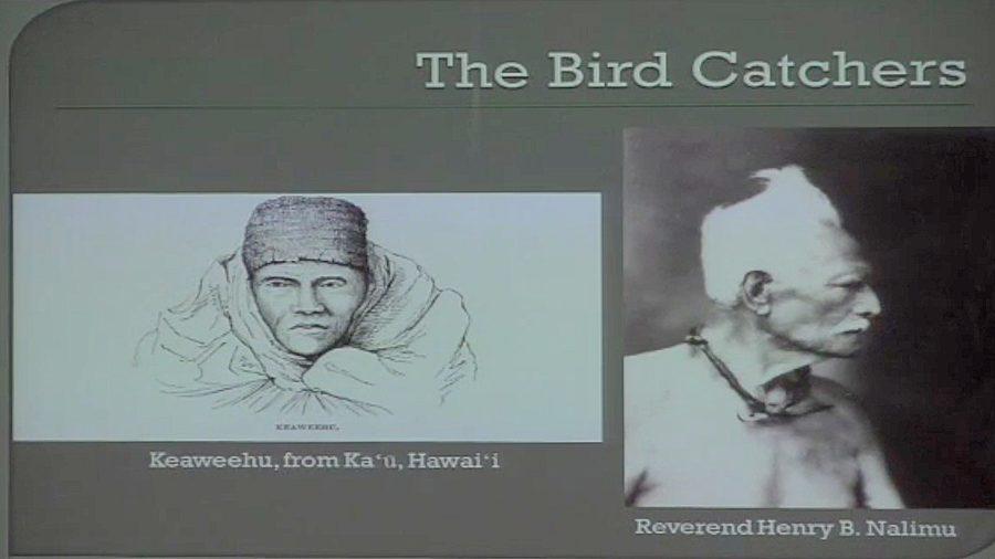 VIDEO: Hawaiian Bird Catchers & Their Methods
