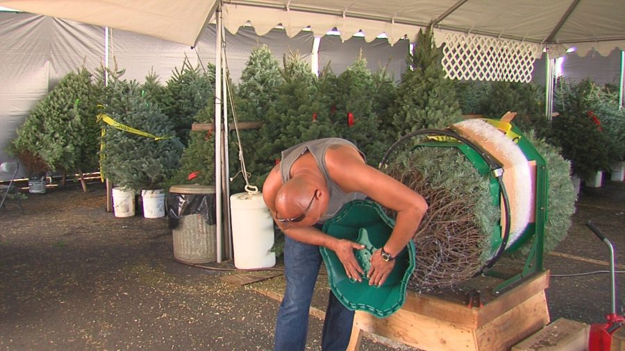 VIDEO: Christmas Trees Arrive On Hawaii Island