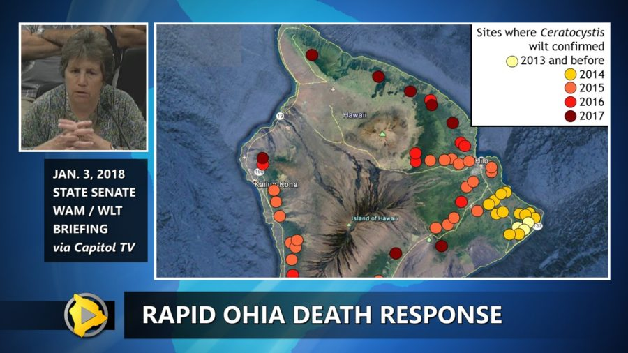 VIDEO: Rapid Ohia Death Response Update