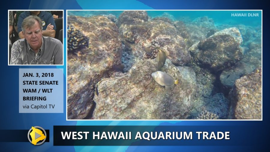 VIDEO: DLNR On West Hawai Aquarium Trade Halt