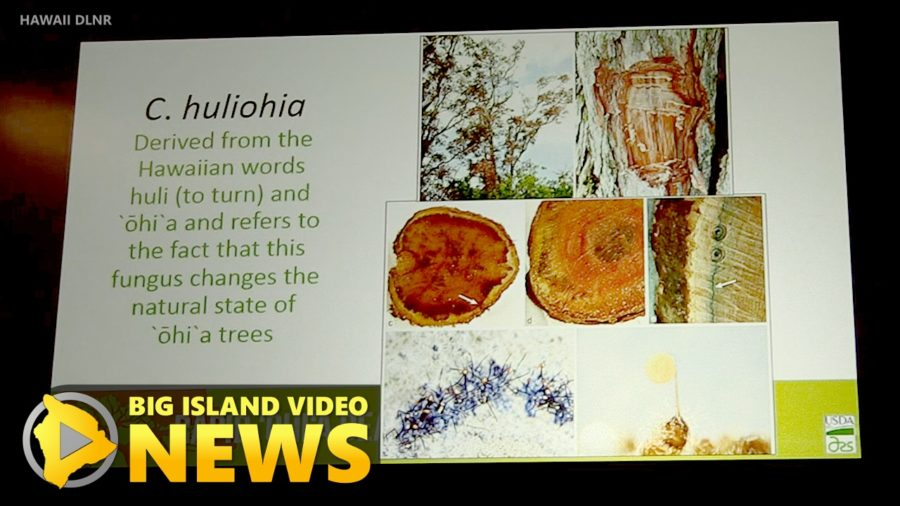 VIDEO: Hawaiian Names For Rapid Ohi'a Death Pathogens A First