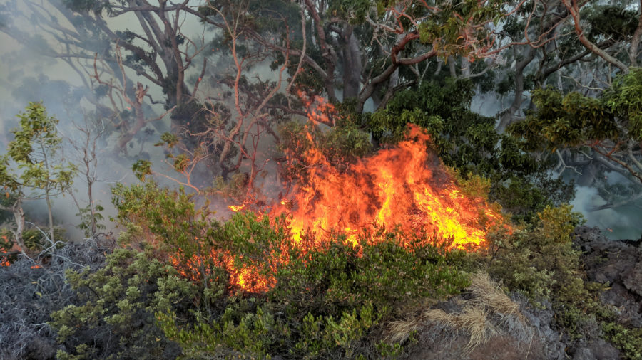 Firefighters Battle Brush Fire On Mauna Loa