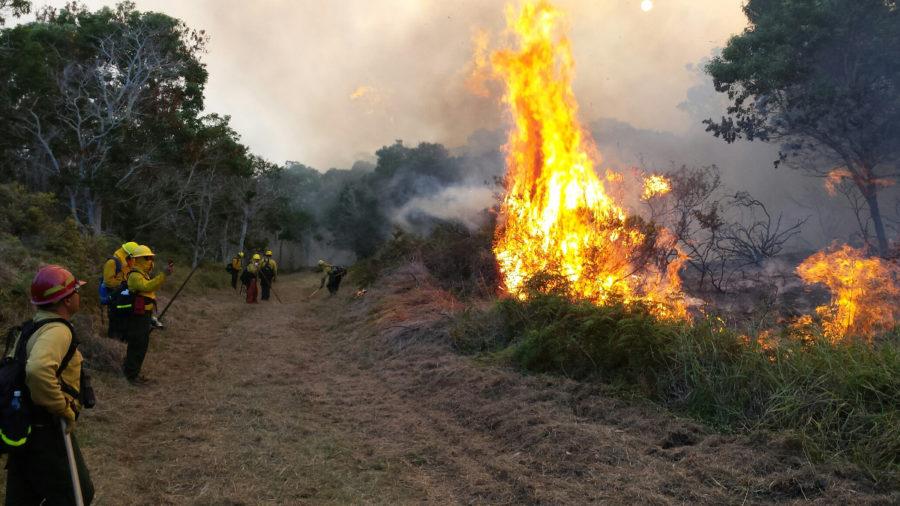 Mauna Loa Fire Grows To 1,495 acres, Half-Mile From Kipuka Ki