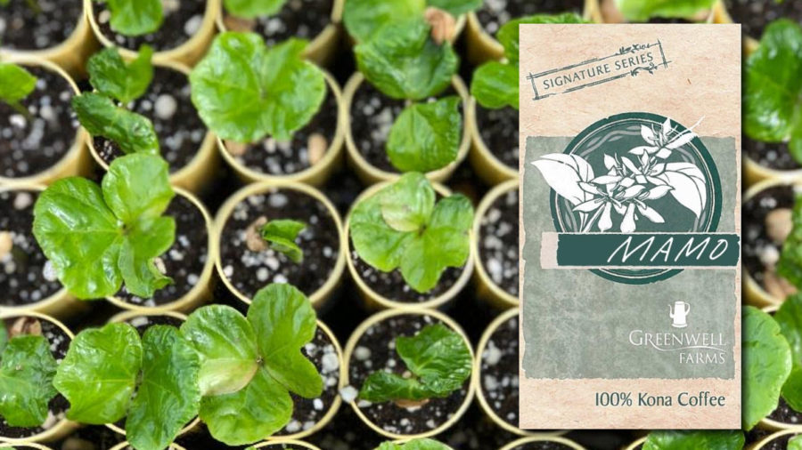 "Kona Farm Introduces ""Mamo"" Hawaiian Coffee Variety"