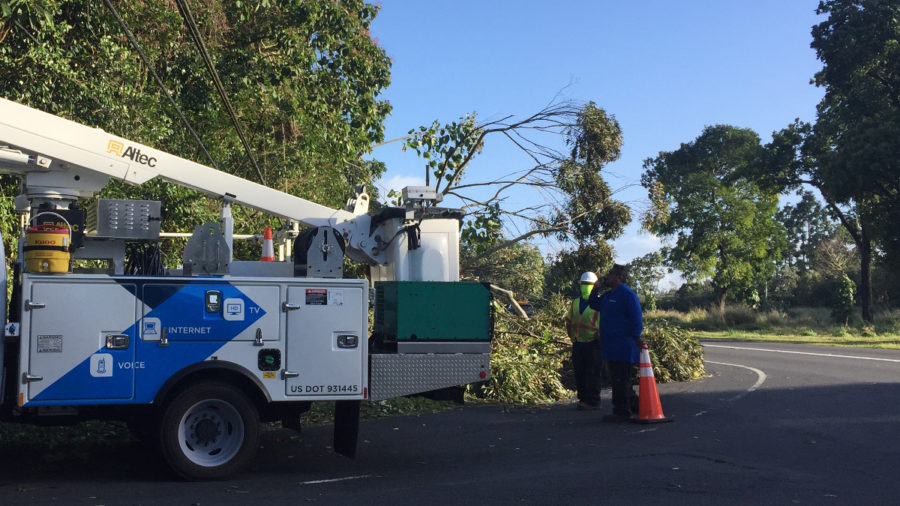 High Winds Knocking Down Trees In Hilo, Puna