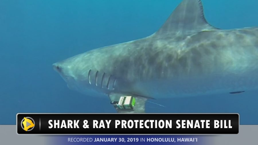 VIDEO: Shark and Ray Protection Bill Advances
