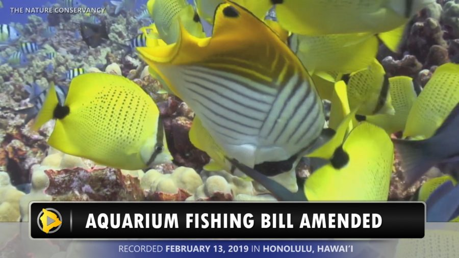 VIDEO: Hawaii Aquarium Fishing Bill Amended