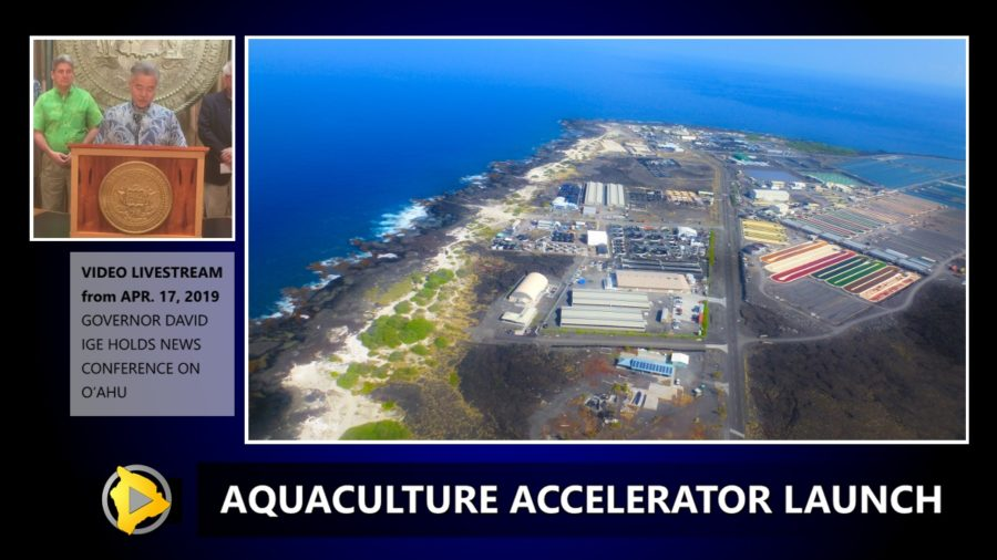 VIDEO: Kona Aquaculture Accelerator Launched