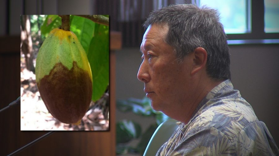 VIDEO: Council Helps Cacao Growers Fight Black Pod Rot
