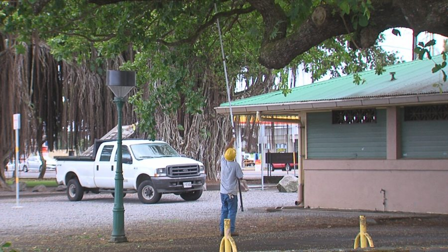 Homeless Cleared As Mooheau Park Gets A Cleaning