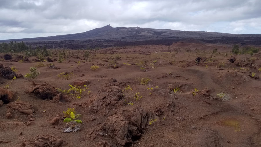 With Puʻu Oʻo Quiet, National Park Opens Nāpau Crater