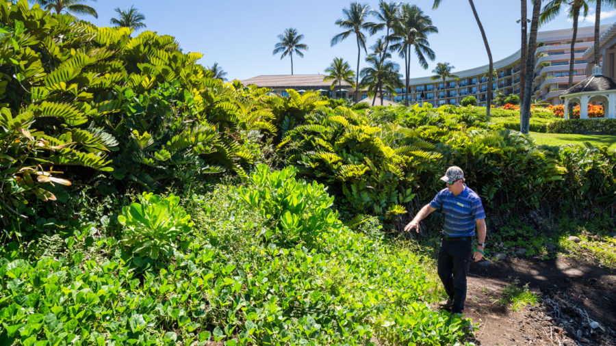 Native Plants Transform Hilton Waikoloa Village Landscape