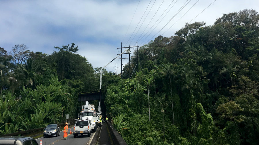 HELCO Repairs Transmission Lines Damaged By Fallen Tree In Hakalau