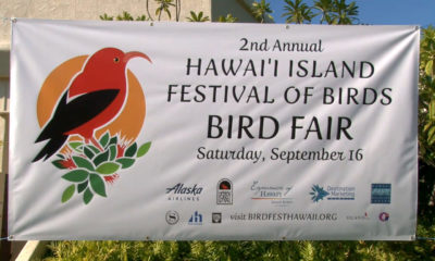 Hawaii Festival Of Birds Cancelled Due To Mauna Kea Uncertainty