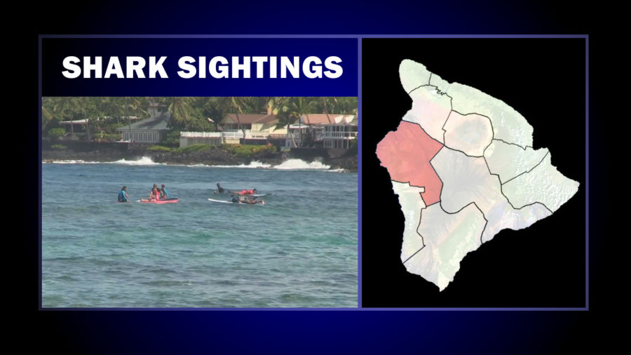 More Shark Sightings Close Two Kona Beach Parks