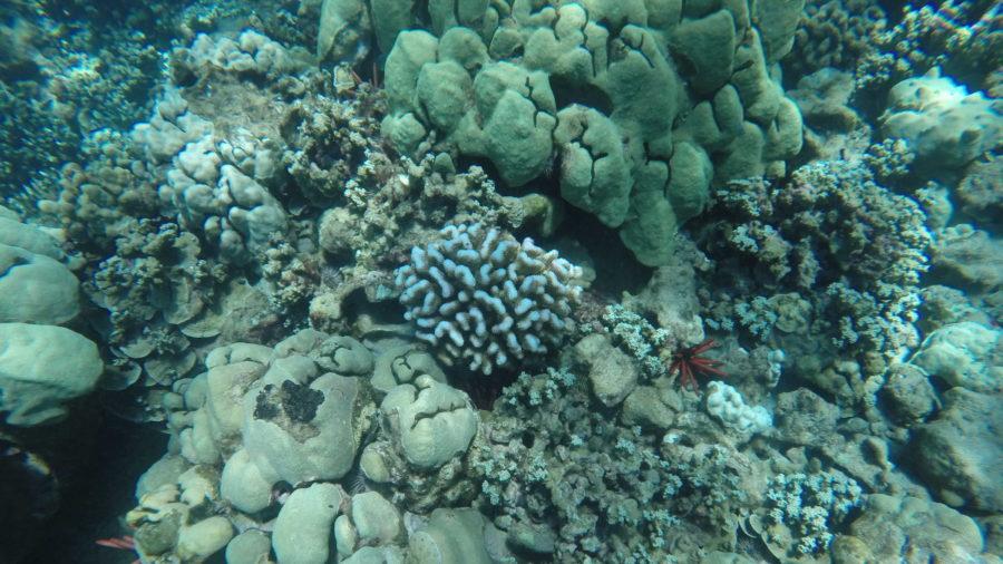 Coral Bleaching Already Underway As Hawaii Waters Heat Up